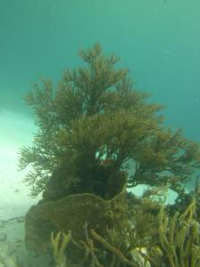 Underwater at Jeep Reef