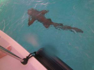 Sandy the Shark