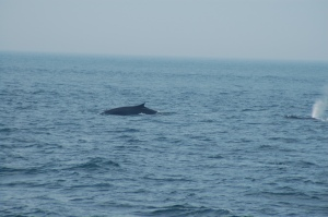 Two whales off our starboard side
