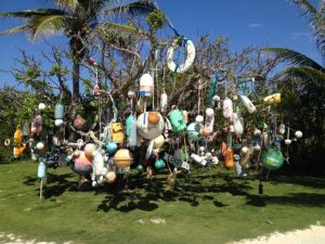 "The ""Bobber Tree"" on Great Guana Cay"