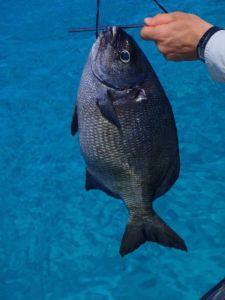 Mystery Fish - please identify!