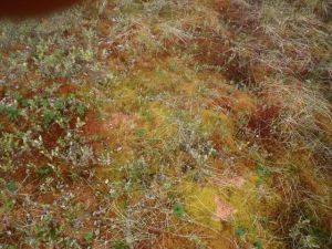 Moss is soft and has beautiful colors