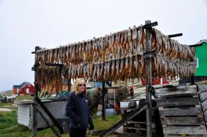 Drying rack - these fish are used for dog food (Photo by Steve D'Antonio)