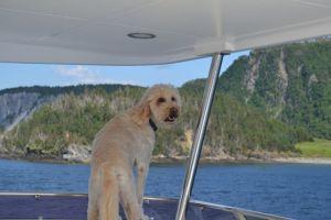 Captain Gulliver on Watch