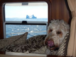 Gulliver rests as the bergs pass by