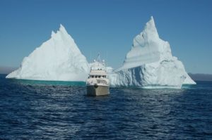 Migration posing with an iceberg