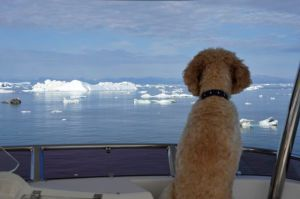 Doggone - that's a lot of ice! (Photo by Steve D'Antonio)