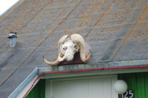 In case you're wondering what to do with that musk ox skull