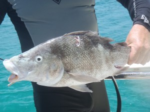 I think it's a Dog Snapper - anyone want to confirm or correct??