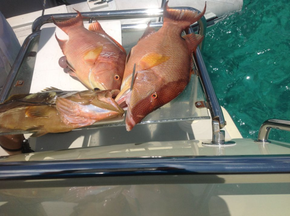 Hogfish and grouper