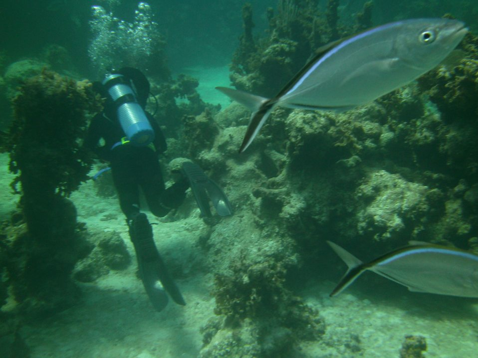 Some fish check us out on a dive