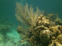More underwater scenery
