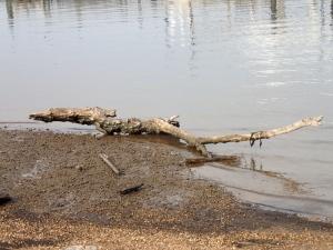Camera Test - Driftwood