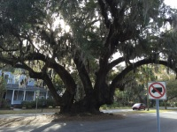2016-03 Charleston andBrunswick_2595